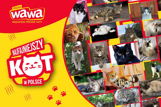 Radio WAWA poszukuje Najfajniejszego Kota w Polsce