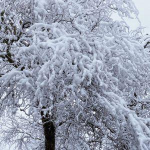 Maruda i śnieg...